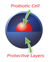 Probiotic cell protective layers