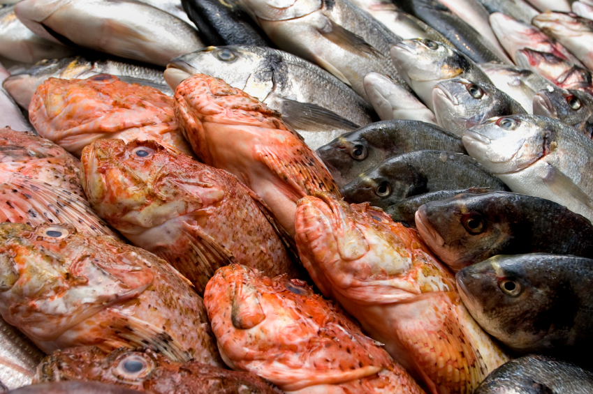 4 fish to never eat avoid these like the plague biotrust for Fish to avoid